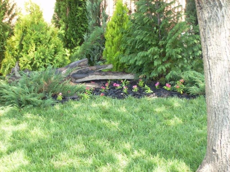 Dvoriste, travnjaci i ostala zelena površina - Page 20 I9494_17